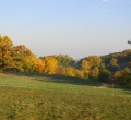 krusen-grass-cattle-07