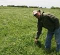 krusen-grass-cattle-11