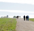 krusen-grass-cattle-8